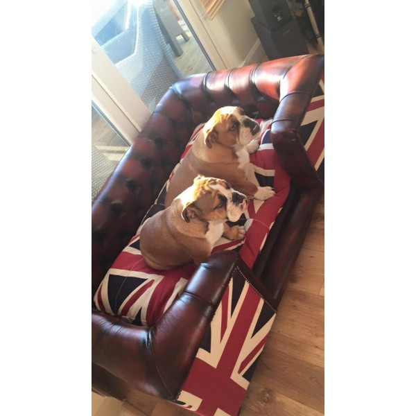 Luxury Chesterfield Style Pet Bed